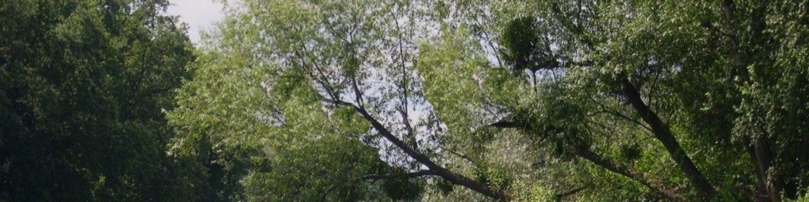 maretakbomen