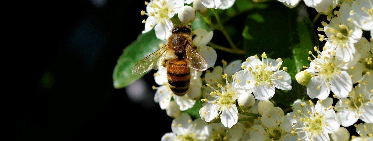 Wereldbijendag & Niemand wil pesticiden