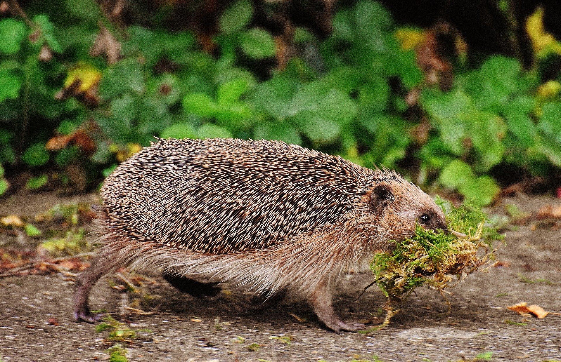 Welke dieren leven in je tuin