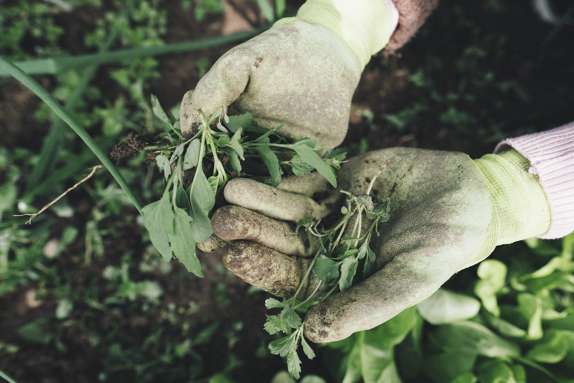 tuinonderhoud Snoeien