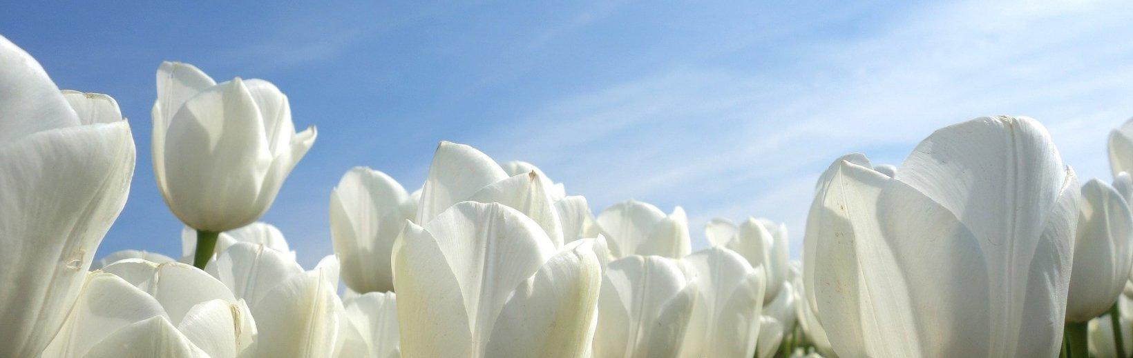 Bloembollen planten in je gazon